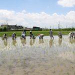 「田植え」「稲刈り」を一緒にしませんか?2018年無農薬で米づくり
