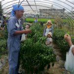 若手農業家とのコラボ企画「夏野菜収穫体験&セミナー」開催報告