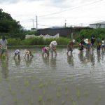 「米作りの会2014」今年も田植えをしました!