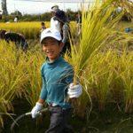 稲刈り2014 – みんなよくやった~!