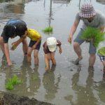 「米作りの会」2012 田植え-Part2
