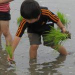 「米作りの会」2012 田植え-Part1