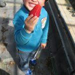 萩原苺農園にて 2011年