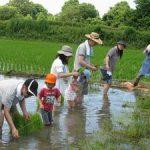「米作りの会」2011 田植えをしました vol.1