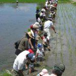 「米作りの会」2011 田植えをしました vol.2